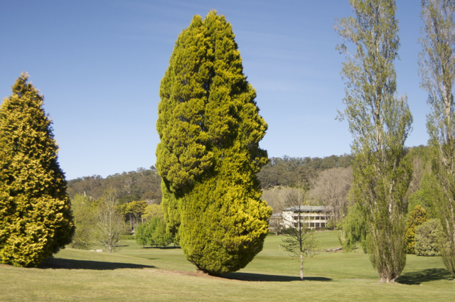 Marge Simpson tree