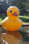 A Big Duck