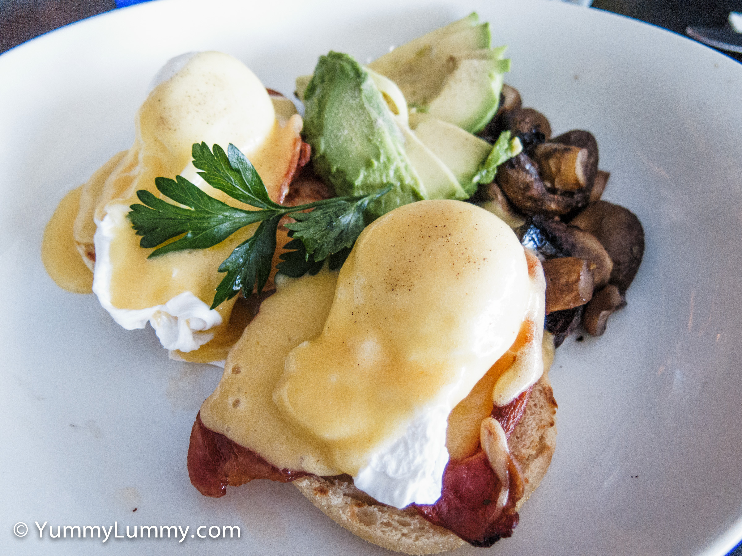 Poached eggs with bacon, hollandaise sauce, avocado and mushroom on sourdough toast