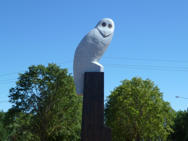Sunday 2014-01-05 10.10.55 AEDT Mr Owl